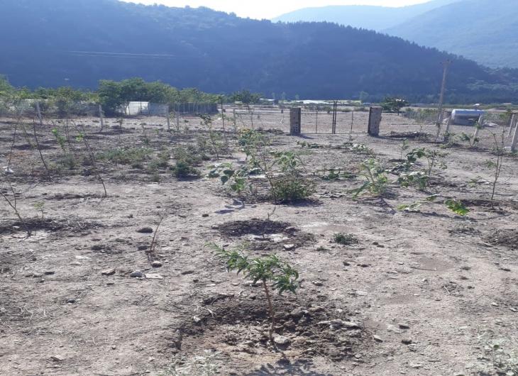 باغ باقر آباد رامیان ۳۰۰ متر